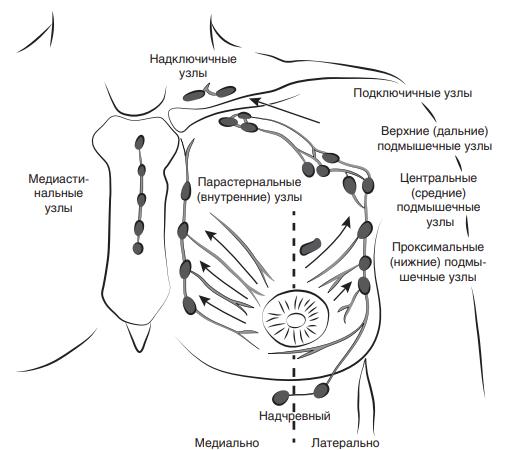 Схема регионарного лимфооттока молочной железы
