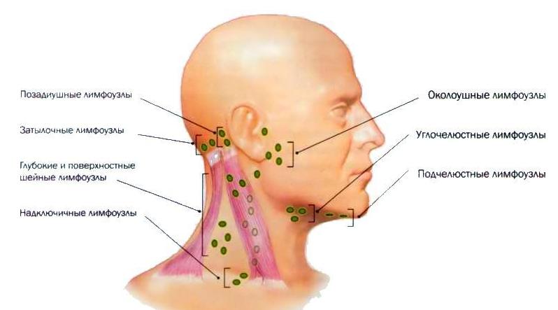 УЗИ лимфатических узлов в Сочи